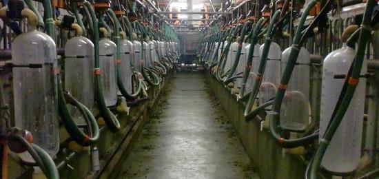 melkstal wetering 006